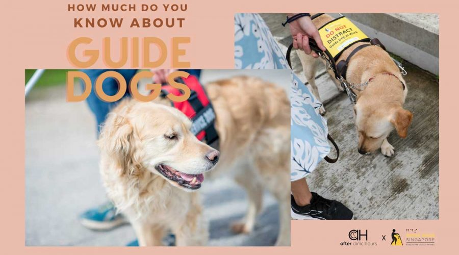 9 Things Every Singaporean Should know about Guide Dogs and the Visually Impaired
